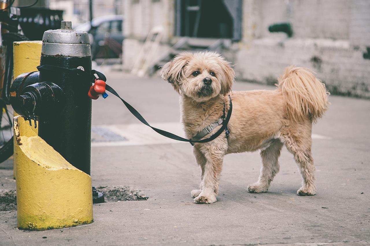 Dog in Dumbo