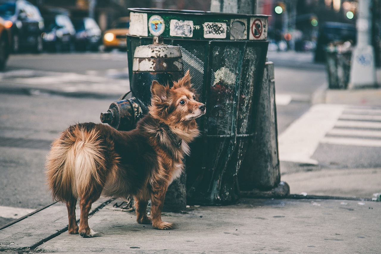 Dog in the Lower East Side
