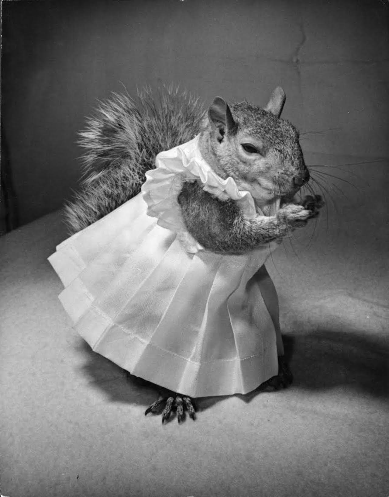 "Nina Leen ""Tommy Tucker"" (1944) (image courtesy of Daniel Cooney Fine Art)"