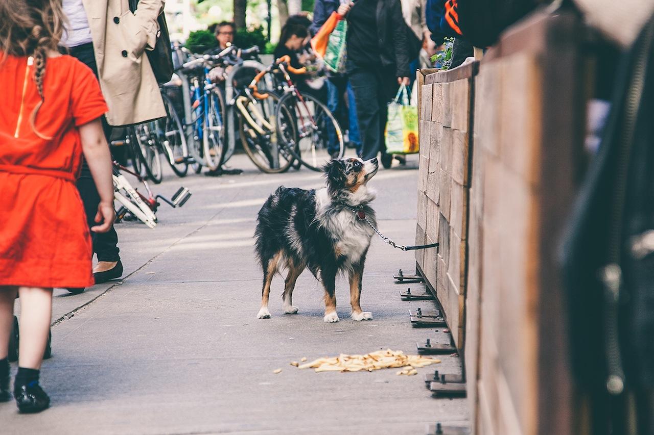 Dog in Soho