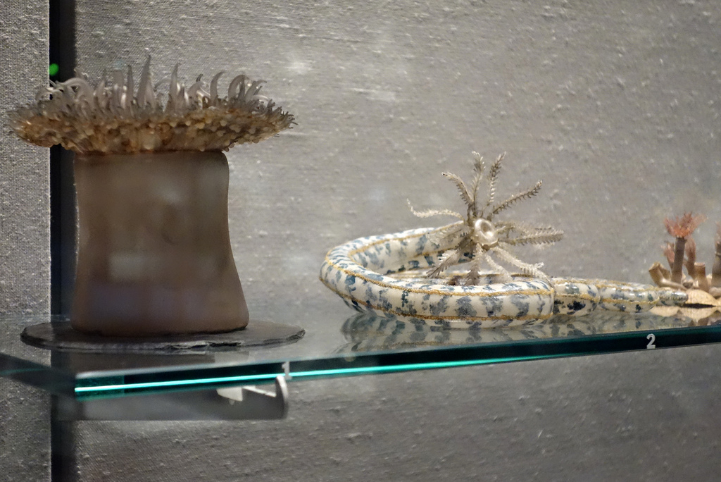 Leopold and Rudolf Blaschka glass specimens at the Corning Museum of Glass