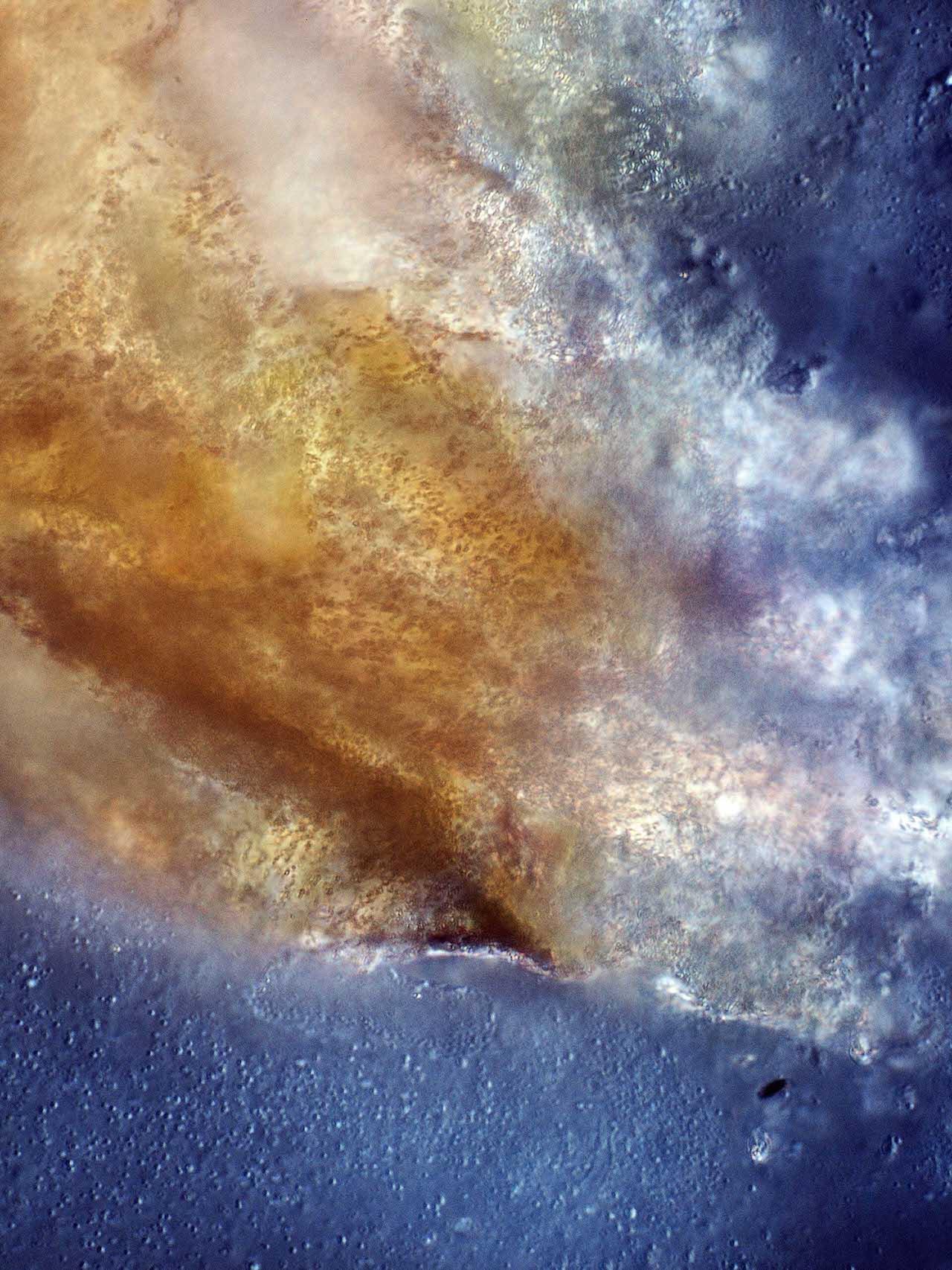 Microphotograph of Stelsel 8 (system 8), 2011, Joris Jansen © Joris Rafael Jansen
