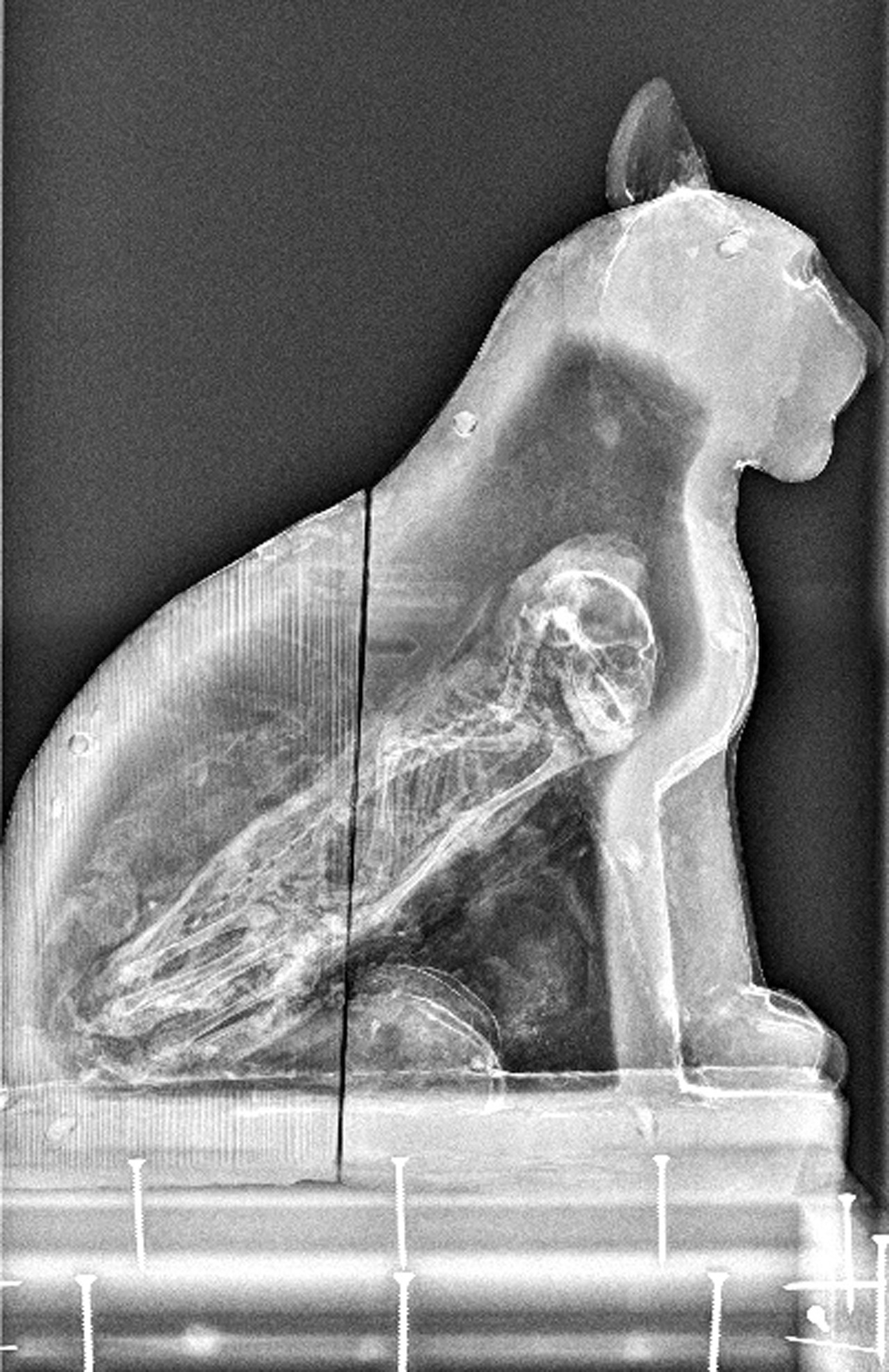Animal Mummies Manchester Museum 3