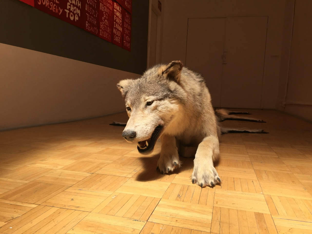"Part of Nicholas Galanin's ""Re-Skinning a Dead Wolf"" installed in 'You Are on Native Land' at Radiator Gallery"