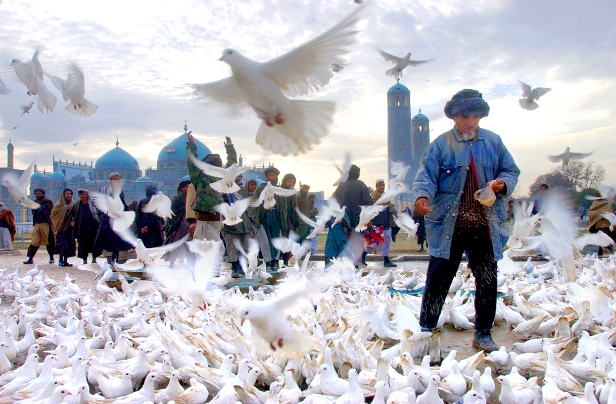 Mazar-i-Sharif, North Afghanistan. A man fed the doves of the shrine of Azrat Ali in the city of Mazar-i Sharif where the spirit of Ali, the son of the prophet Mohammad is kept.  Twenty pairs of doves were orignally brought to the shrine in the sixteenth century by Sultan Hussein Byeqra from Nejev, in modern day Iraq, where Ali is buried.   The doves, known locally as Azrat's army, and as symbols of peace are according to the current mullah of the mosque, the first to leave when fighting breaks out, a frequent occurence, and the last to return.  Photo by James Hill/30 November 2001.
