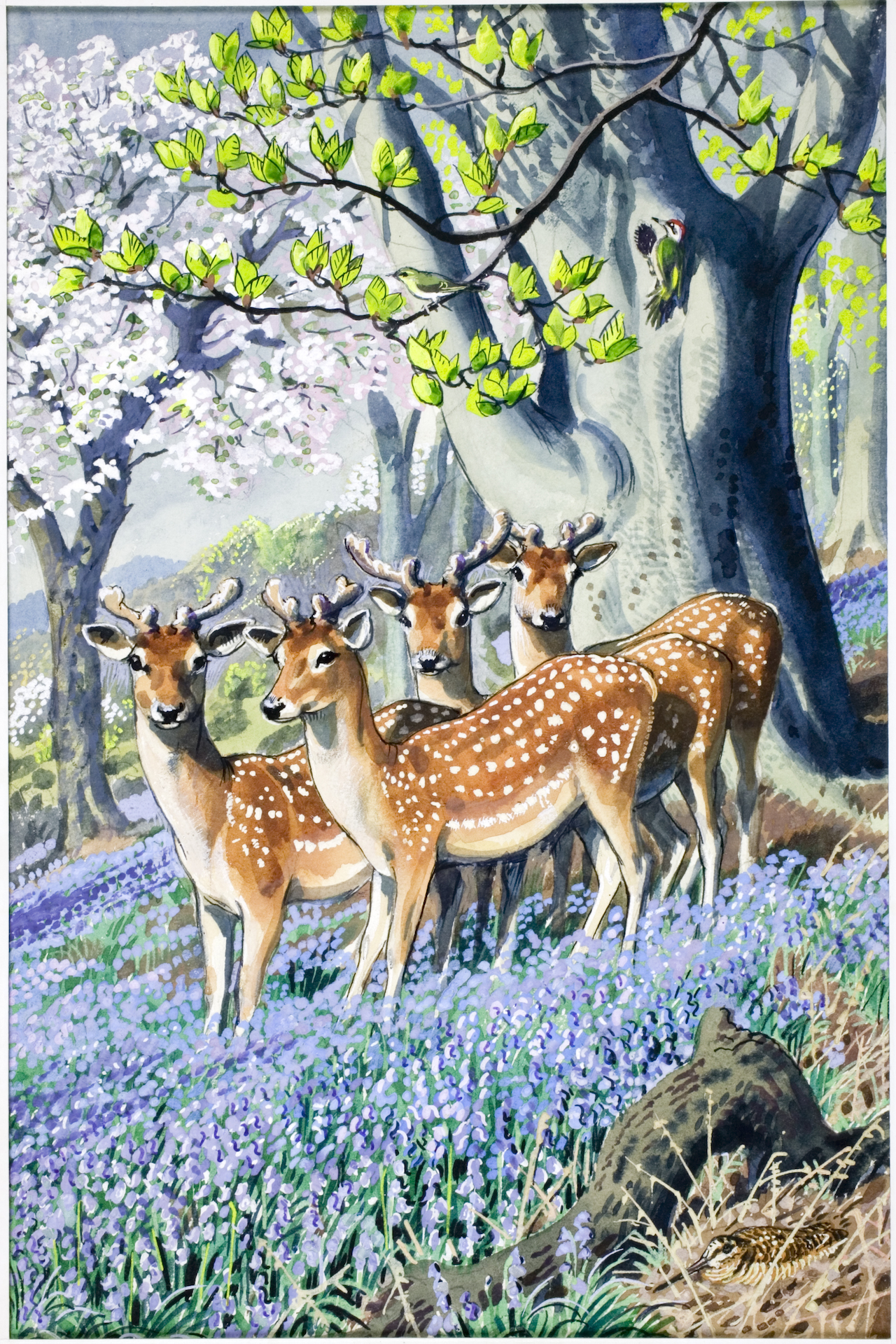 """E.L. Grant Watson, illustration from """"What to Look for in Spring"""" (1961)"""