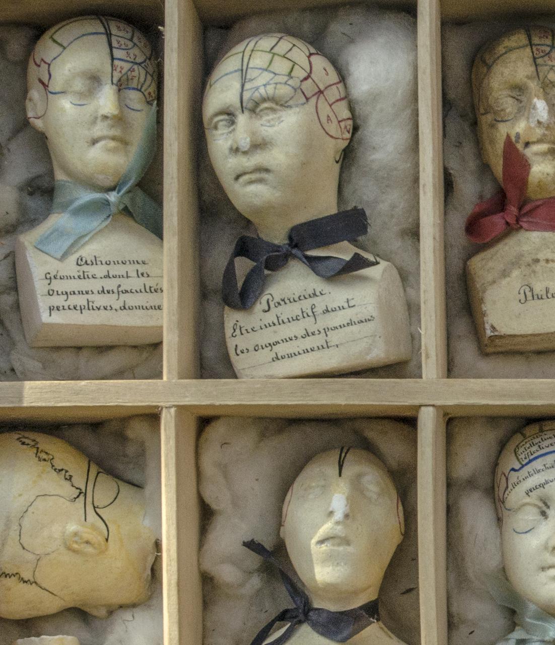 12 Phrenology Busts (France, 19th century), 8 x 4 x 5 cm each (© Rosamond Purcell, 2014)