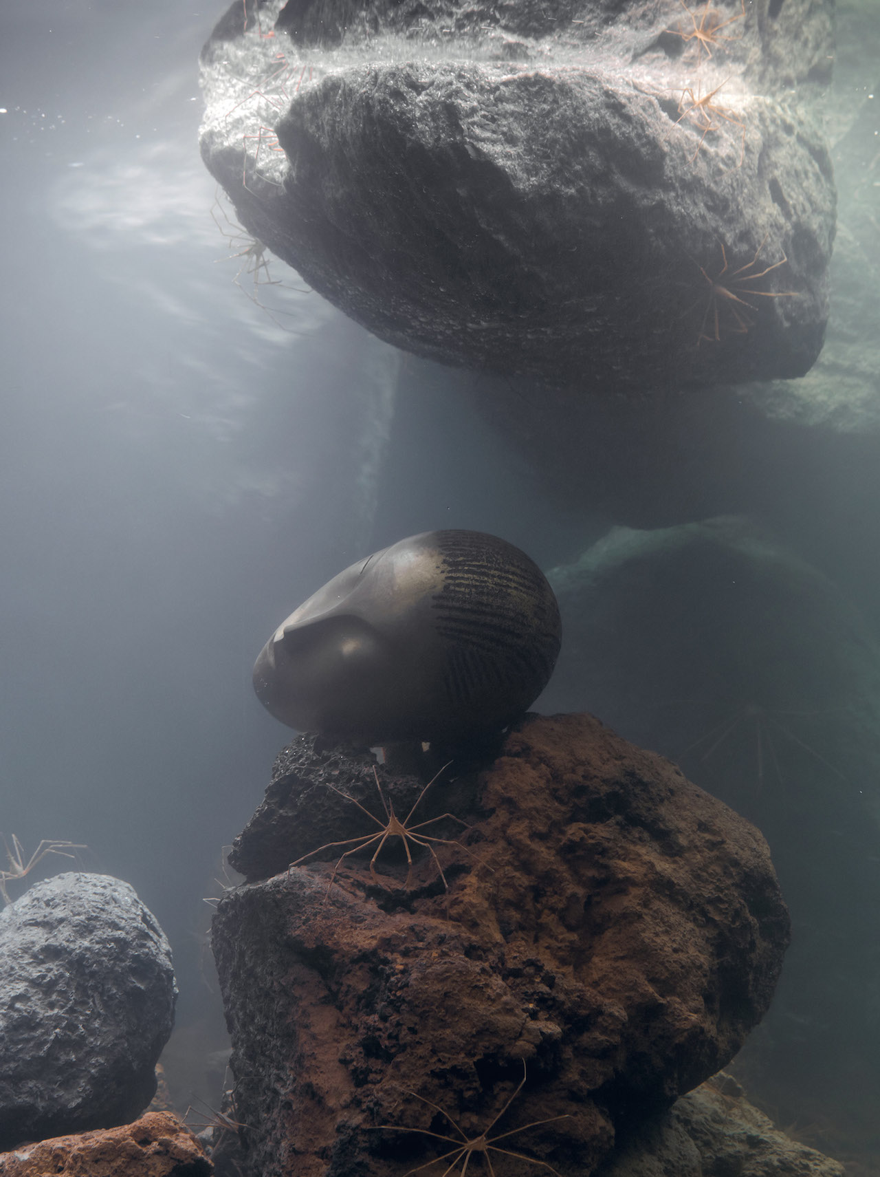 "Pierre Huyghe, ""Zoodram 5 (after 'Sleeping Muse' by Constantin Brancusi)"" (2011), glass tank, filtration system, resin mask, hermit crab, arrow crabs, and basalt rock (image courtesy LACMA) (click to enlarge)"