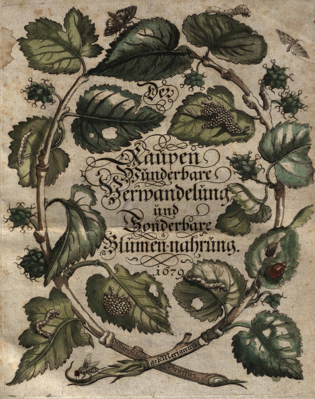 Maria Sibylla Merian, title page of 'Der Raupen wunderbare Verwandlung und sonderbare Blumennahrung' (1679) (courtesy Universitätsbibliothek Johann Christian Senckenberg, Frankfurt)