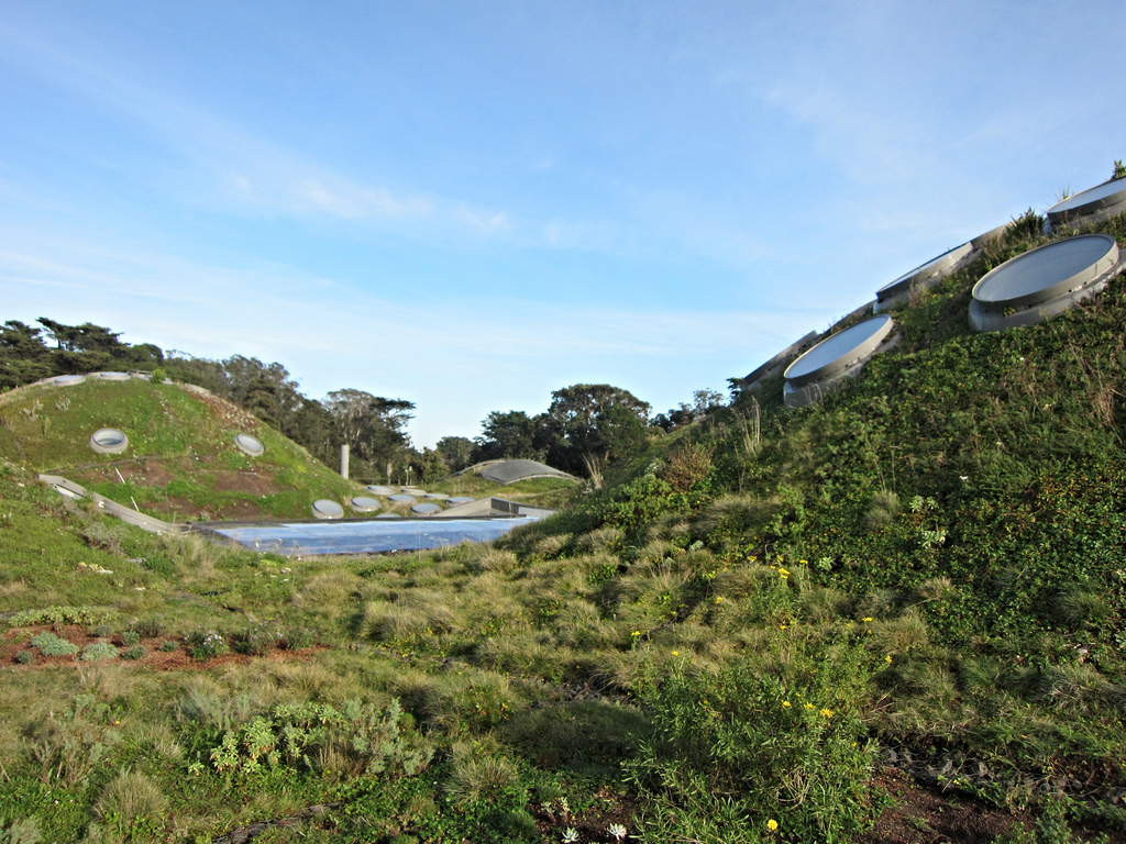 Green roof at the California Academy of Sciences (photo by the author for Hyperallergic)