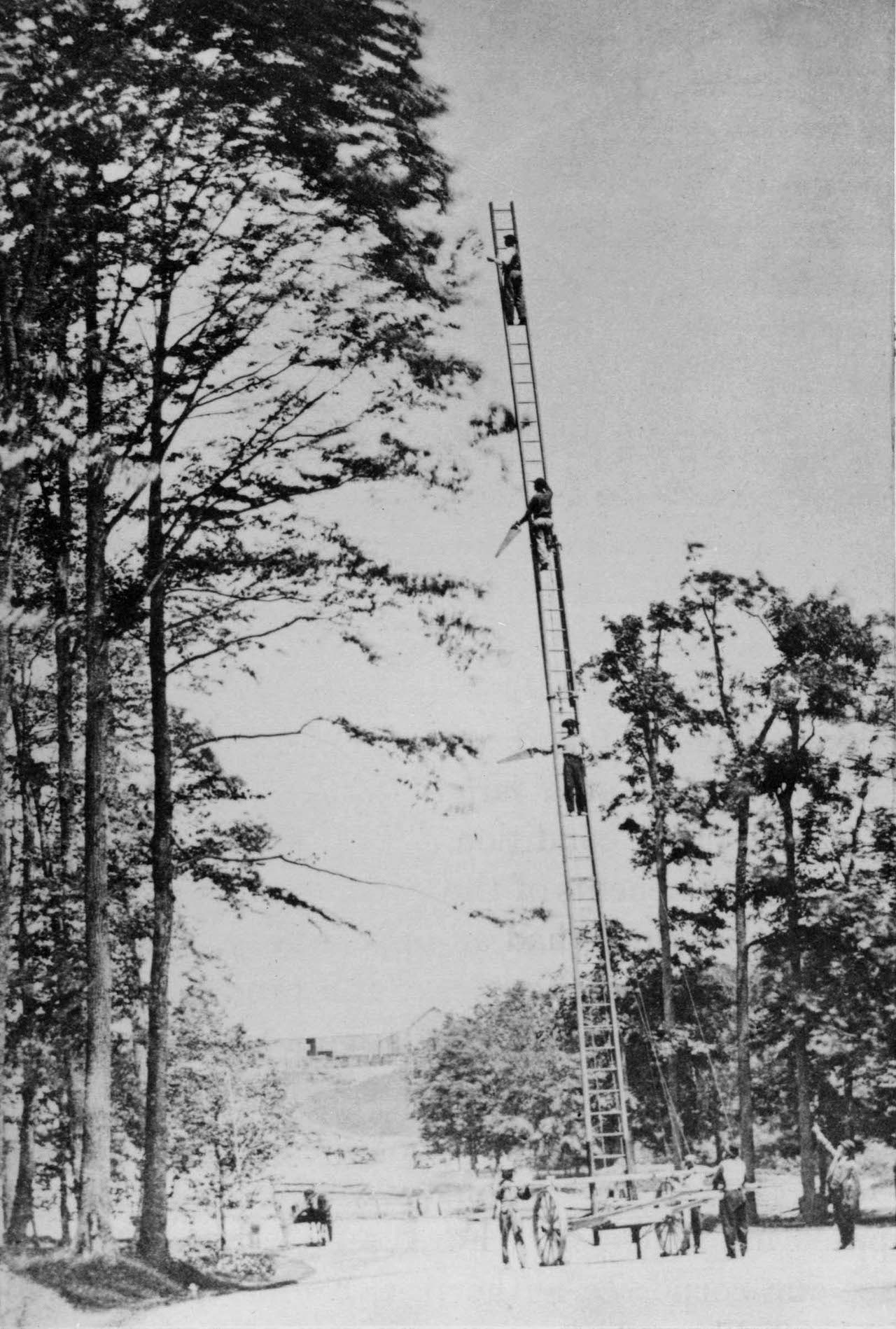 Tree Pruning, Prospect Park, 1869