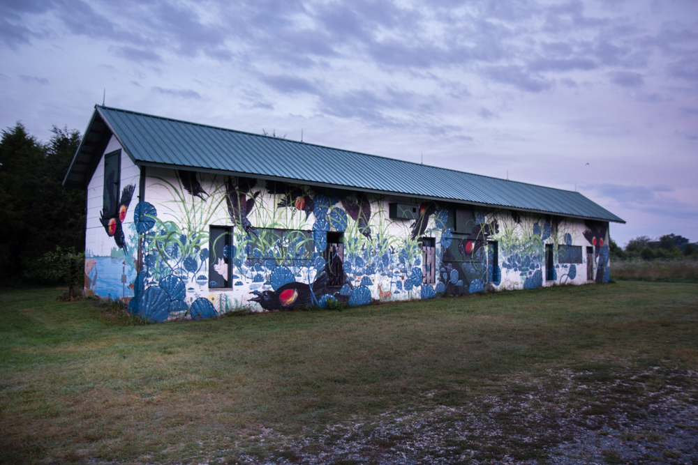 Mural at the Pickering Creek Audubon Sanctuary in Easton, Maryland (photo by Jessica Stewart)