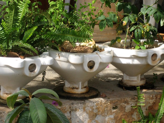 People like Tonie Atkinson are finding old toilets make great garden planters (Image via Flickr/southbeachcars)