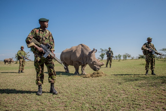 Corporal Simon Irungu and his platoon of armed Kenyan guards with Sudan, the last male Northern white rhino (photo by Ami Vitale)