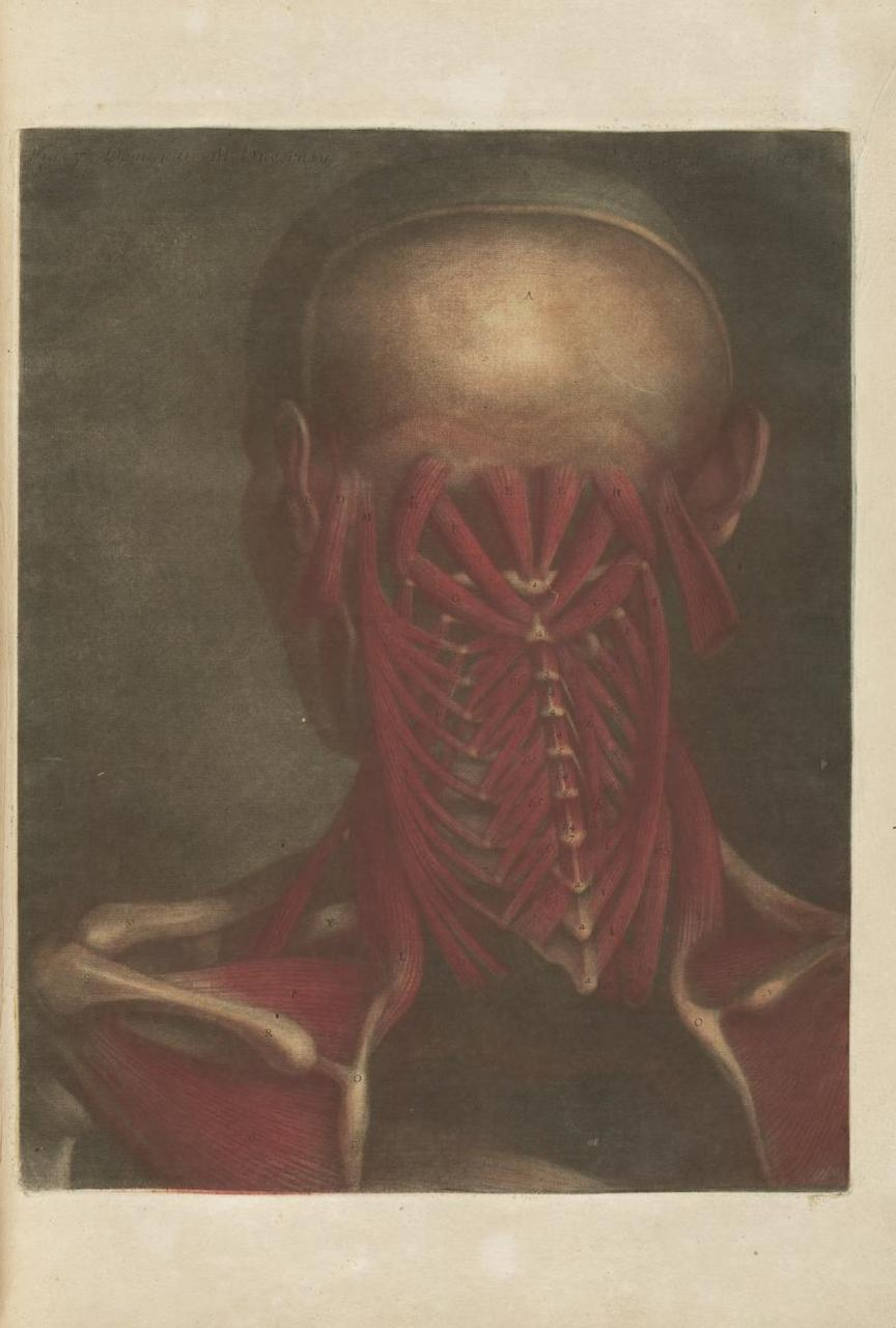 18th-Century Anatomical Illustrations Reveal Flayed Flesh and ...