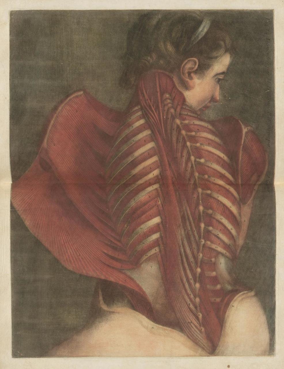 Cast Iron Paint >> 18th-Century Anatomical Illustrations Reveal Flayed Flesh and Shining Bones