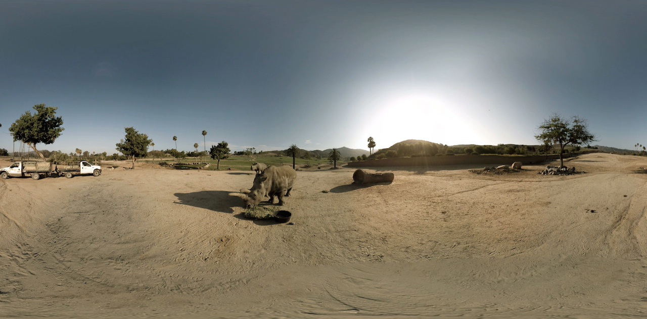 Nola the white rhinoceros at the San Diego Zoo, filmed for virtual reality (all images courtesy Jongsma + O'Neill) (click to enlarge)