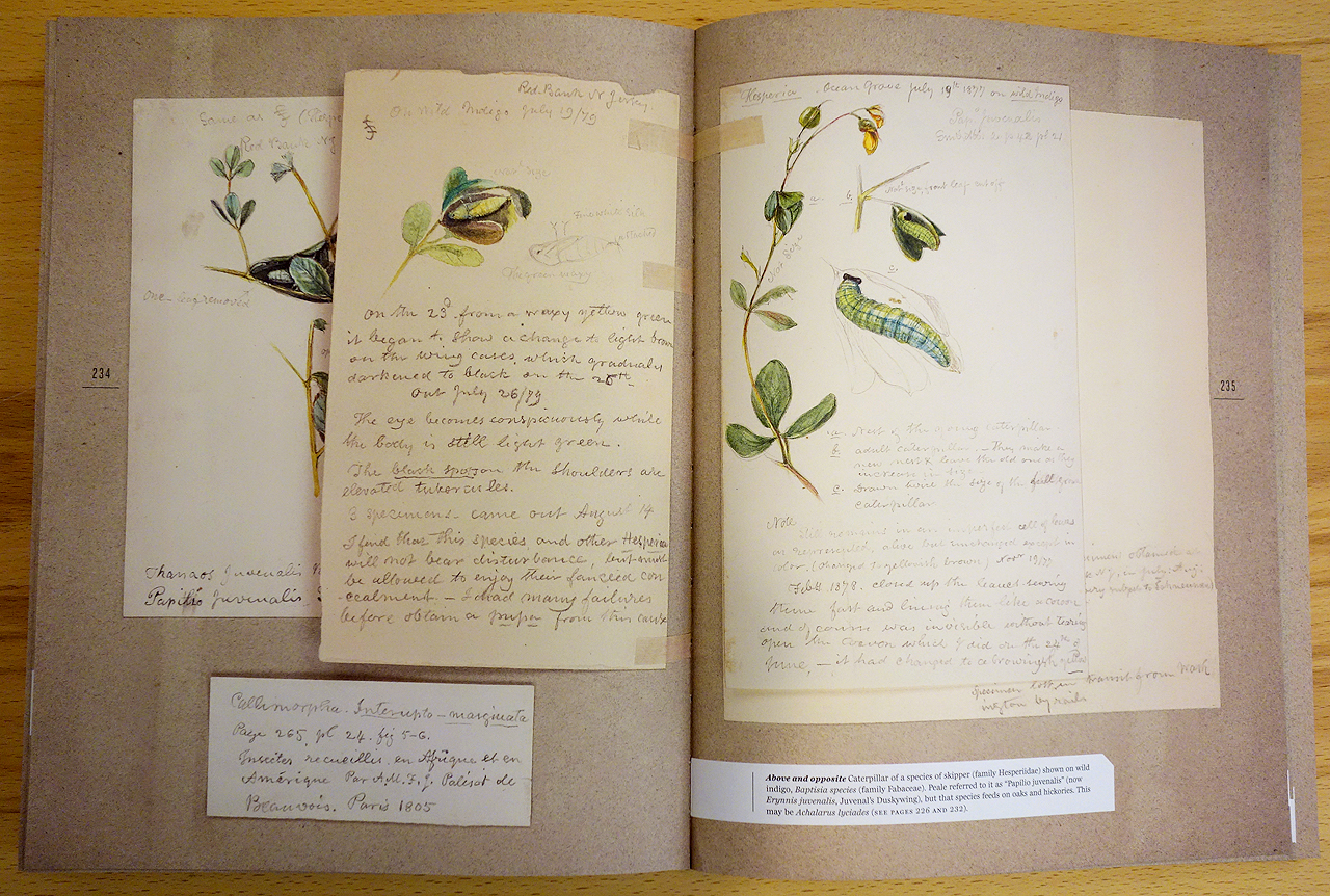 Pages from 'The Butterflies of North America: Titian Peale's Lost Manuscript' (photo of the book for Hyperallergic)