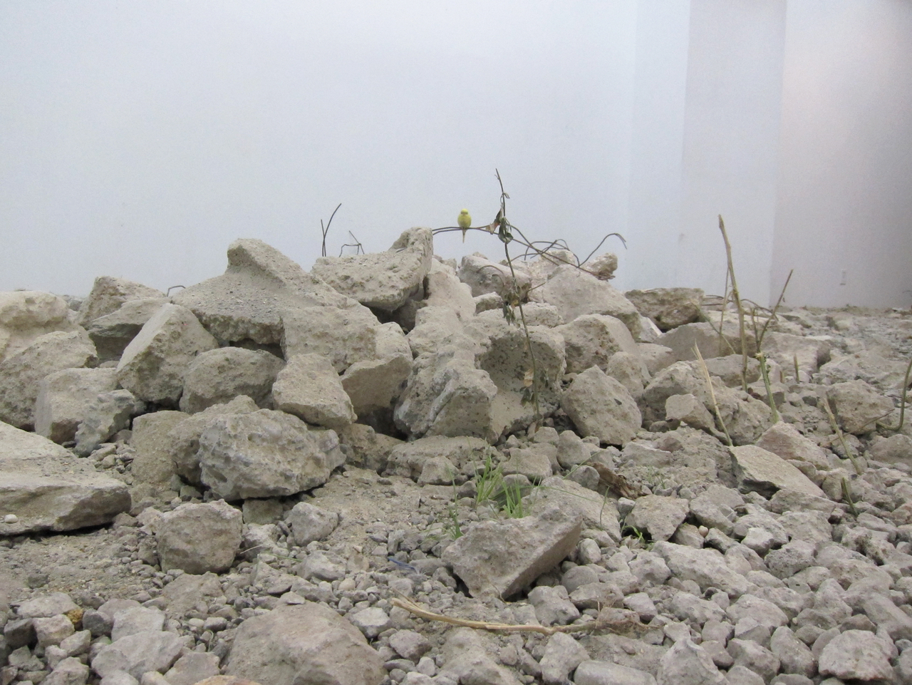 "Martin Roth, ""untitled (debris)"" (2015)"
