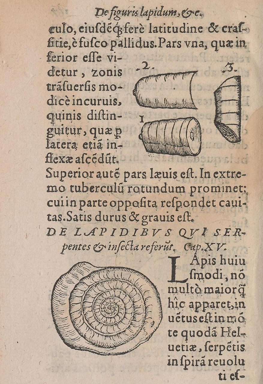 Woodblock illustration from Conrad Gessner's 'De Rerum Fossilium Lapidum et Gemmarum Maxime, Figuris et Similitudinibus Liber' (1565)