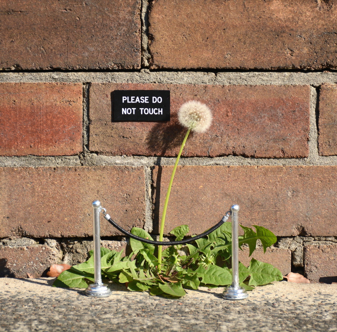 Interventions by artist Michael Pederson creates humorous and thoughtful moments in the noise of the urbanscape. (via Colossal)