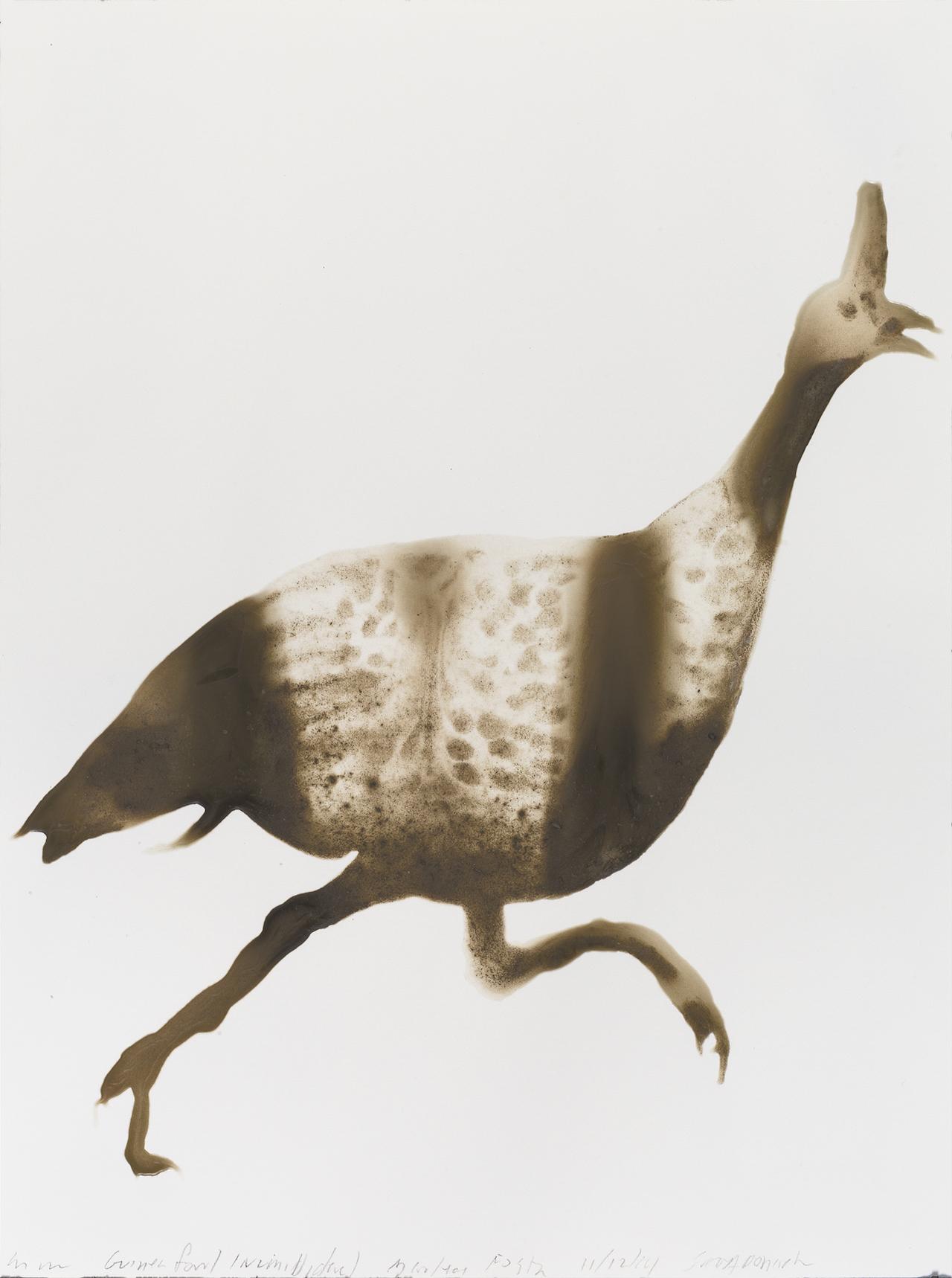 Guineafowl12x9