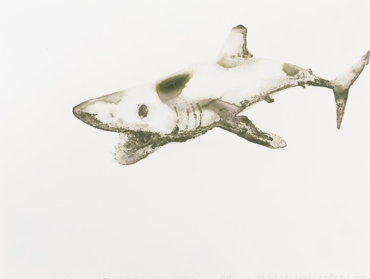 Mako Shark18x24