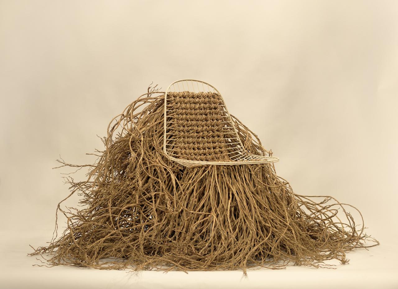 16.Wild Wire by EdouardFrancois ©EdouardFrancois