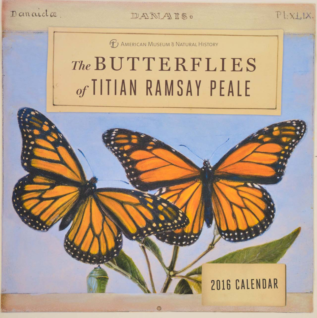 Butterflies of Titian Ramsay Peale 2016 Wall Calendar (via AMNH)
