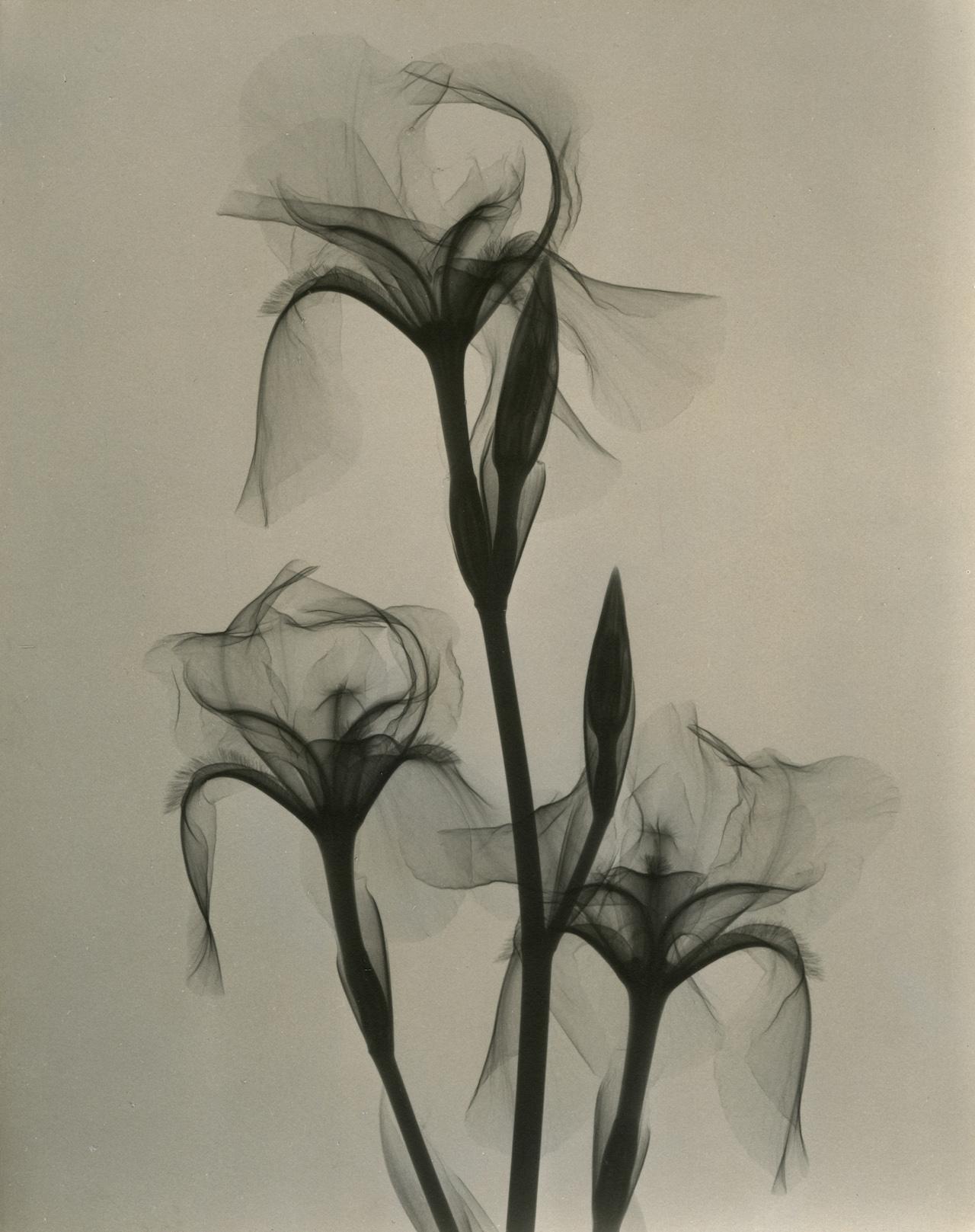 Dr. Dain L. Tasker, Fleur-de-lis, 1936