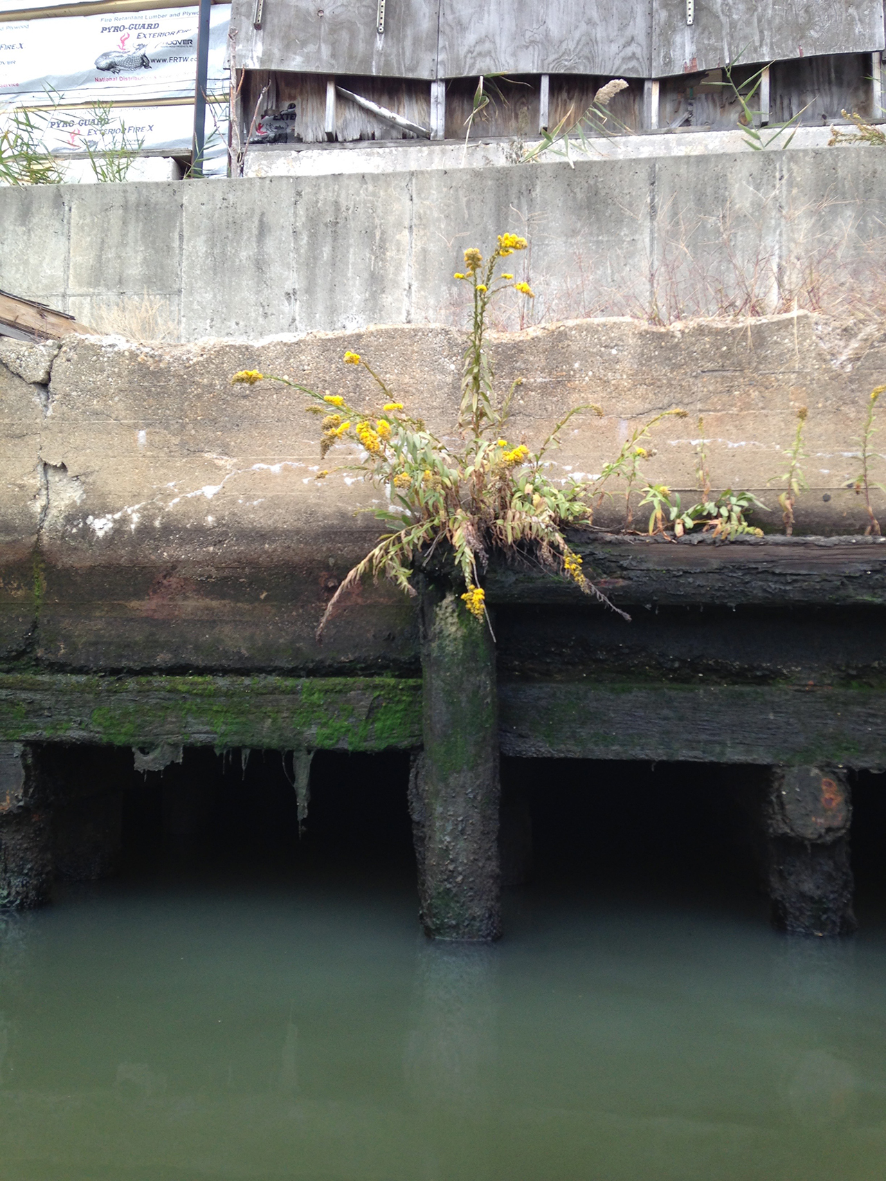 Plant life along Newtown Creek (click to enlarge)