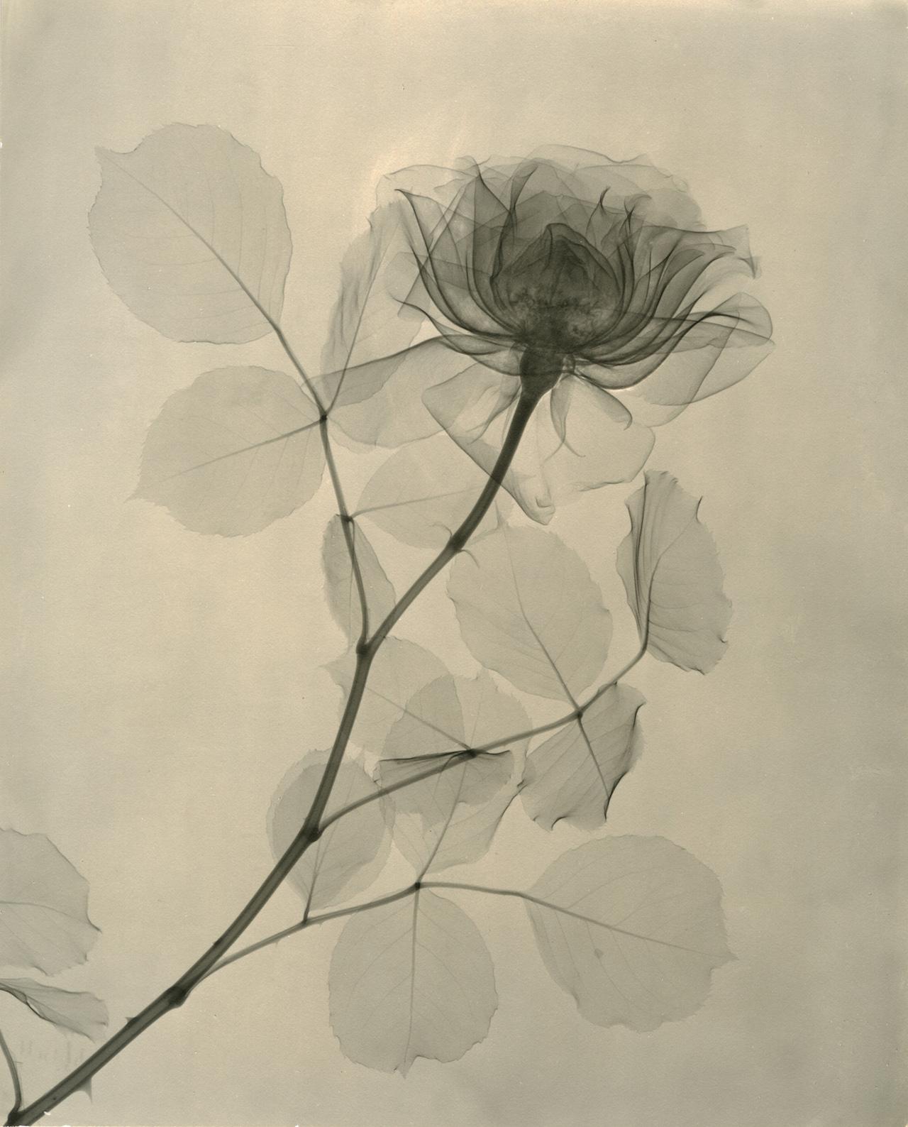 Tasker, A Rose 1936