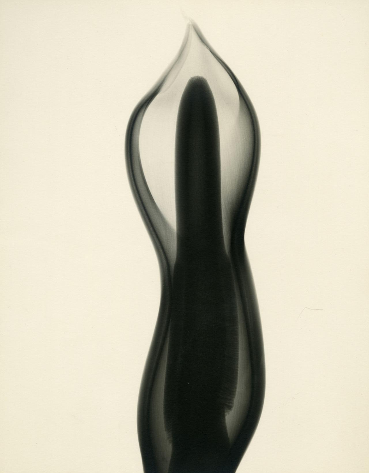 Tasker, Philodendron, 1938