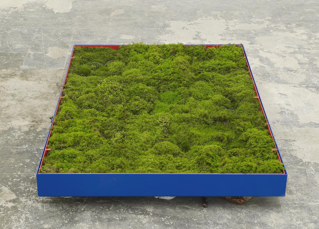 buttner_moss_garden_PP