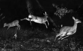 Post image for The First Flash Photographs of the Natural World At Night
