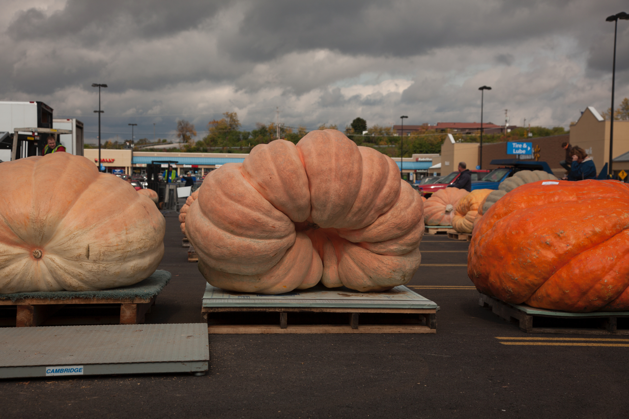 Giant Pumpkin Growers Association of Western Pennsylvania Weigh-In. Altoona, PA, 2014. Image courtesy the Center for PostNatural History