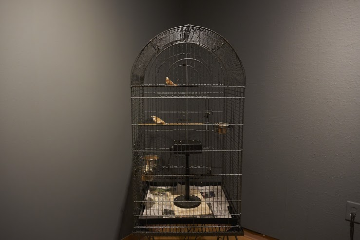 While Contemplating Their Fate in the Stars, the Twins Surround the Enemy, 2003 Installation with two finches, cage and theremin 5' x 2' x 2', image courtesy of