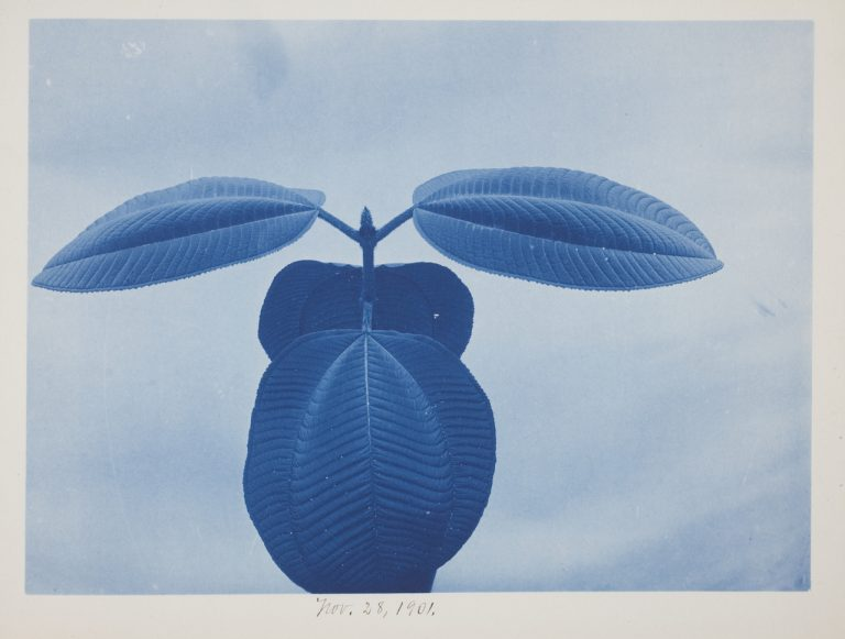 Photography's Blue Period Gets Its First Major Show in the US