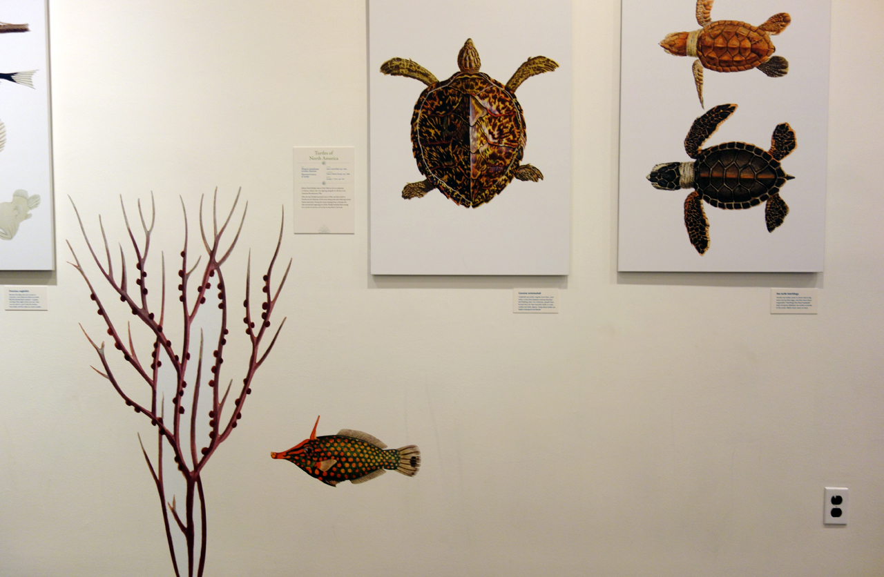 Installation view of 'Opulent Oceans' at AMNH