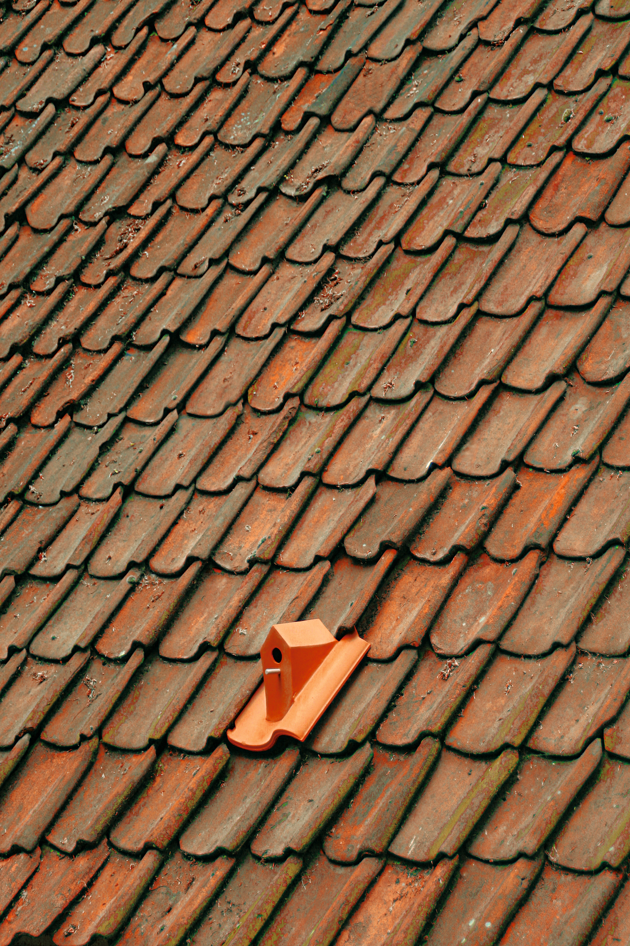 """Klaas Kuiken, """"Birdhouse Rooftile"""" (2010) in Arnhem, The Netherlands (or elsewhere) (photo by Klaas Kuiken) (click to enlarge)"""