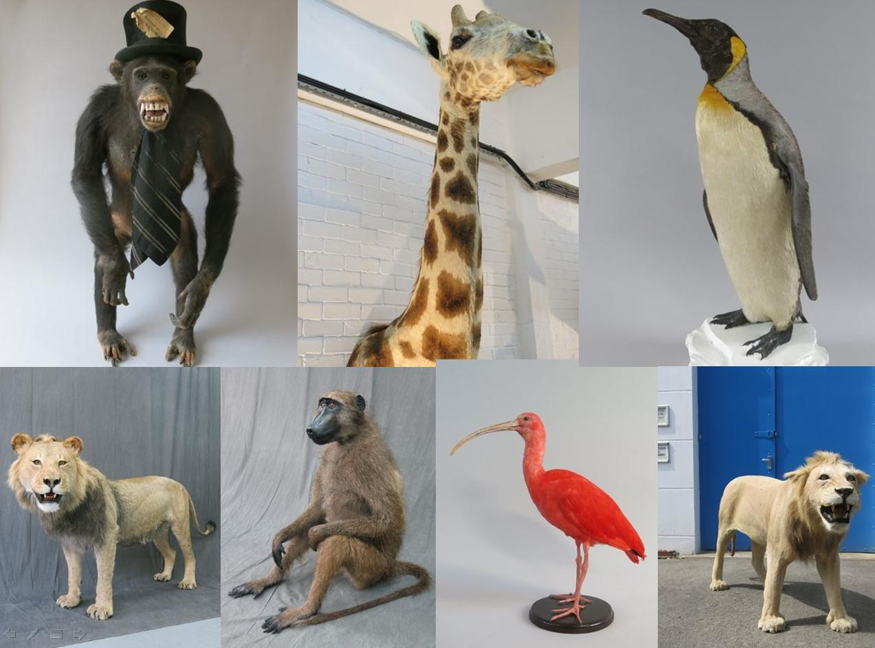 Some of the taxidermy animals stolen in London earlier this month (photo © Metropolitan Police)
