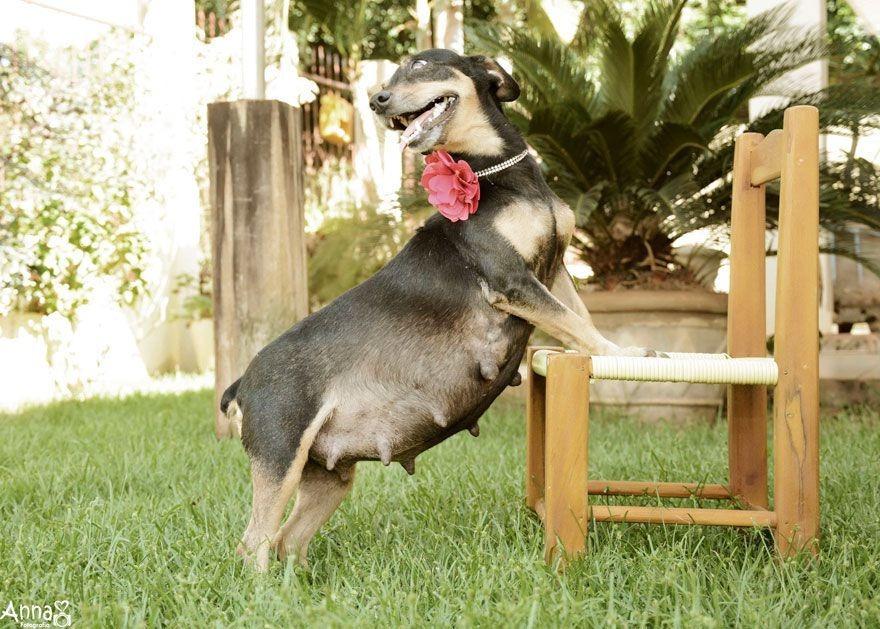 dog-maternity-photo-shoot-lilica-ana-paula-grillo-3