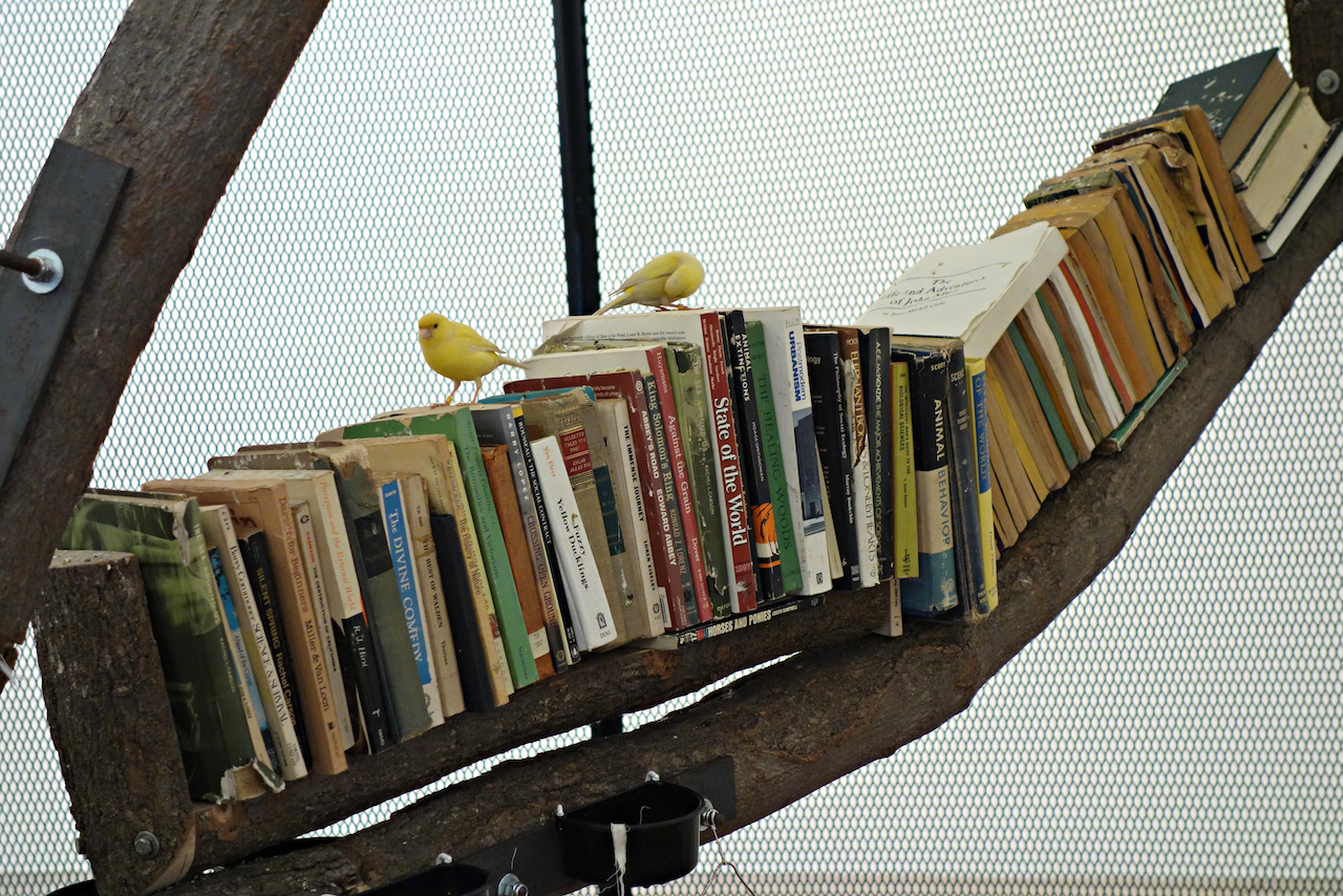 Installation view of 'The Library for the Birds of New York and Other Marvels' at Tanya Bonakdar Gallery