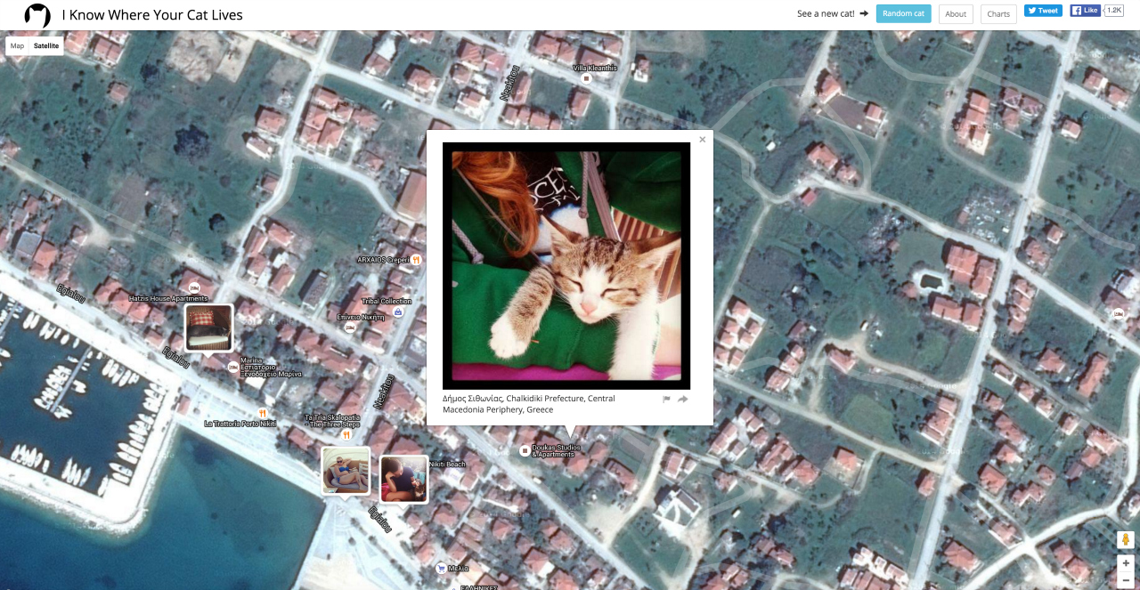 I Know Where Your Cat Lives (screenshot by the author for Hyperallergic)