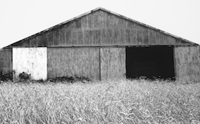 Post image for The Natural Geometries of Ellsworth Kelly's Photographs
