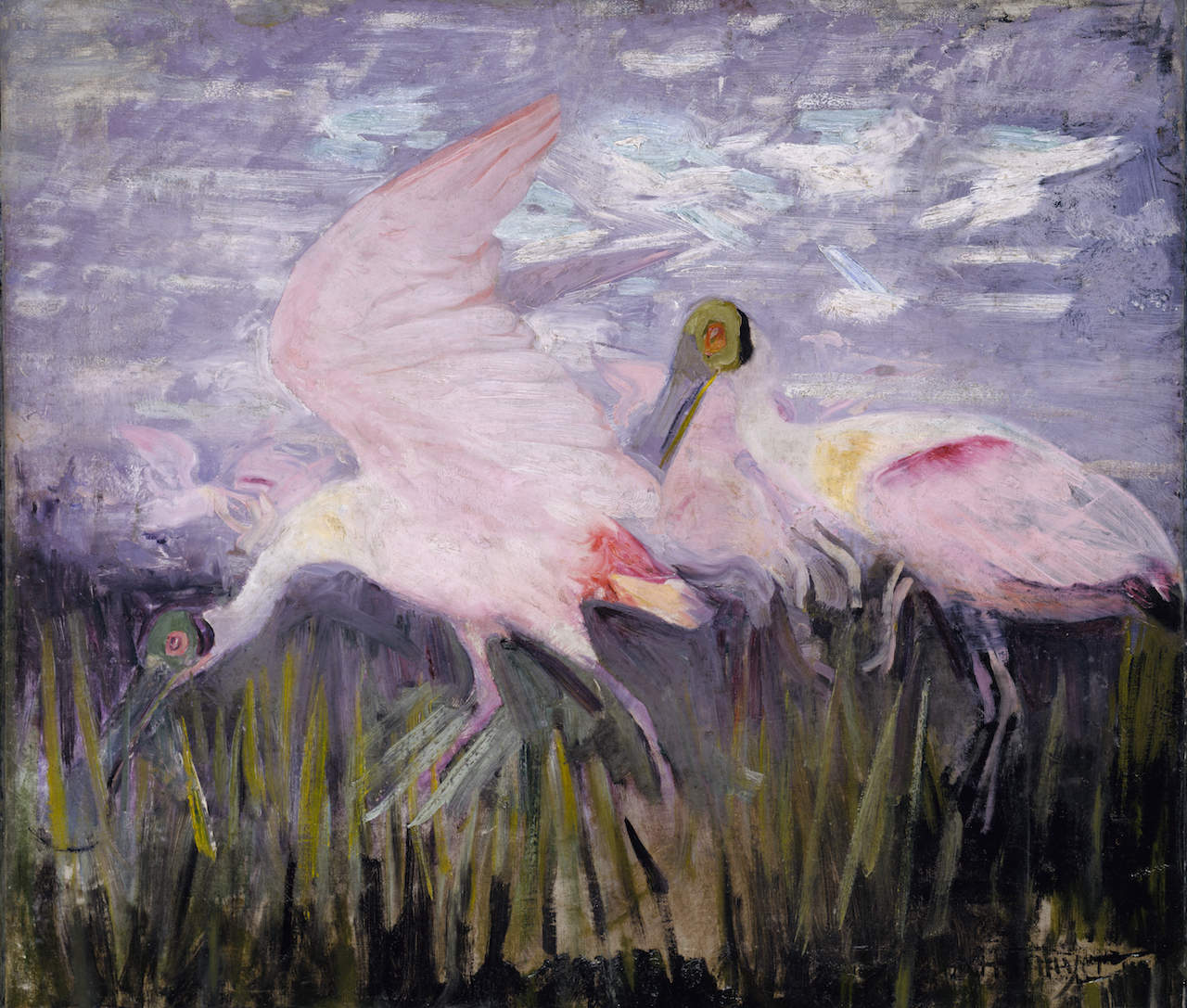 """Abbott Handerson Thayer, """"Roseate Spoonbills,"""" study for 'Concealing Coloration in the Animal Kingdom' (1905-09), oil on paperboard (courtesy Smithsonian American Art Museum, gift of the heirs of Abbott Handerson Thayer)"""