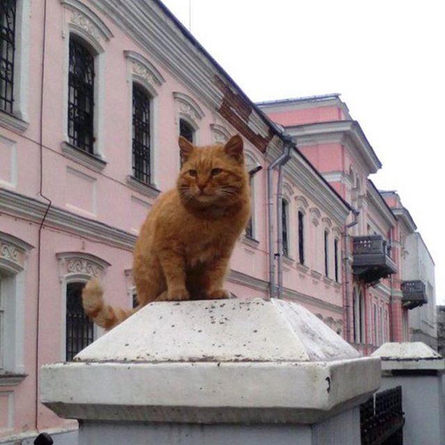 Marai the cat (photo via @oka_info/Instagram)