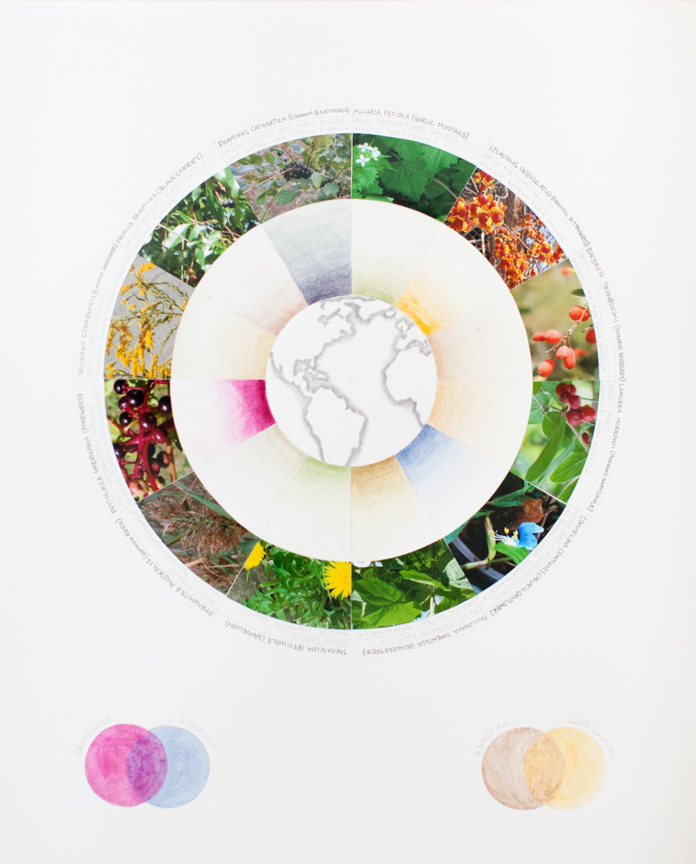 Ellie Irons Color Wheel GreaterNY