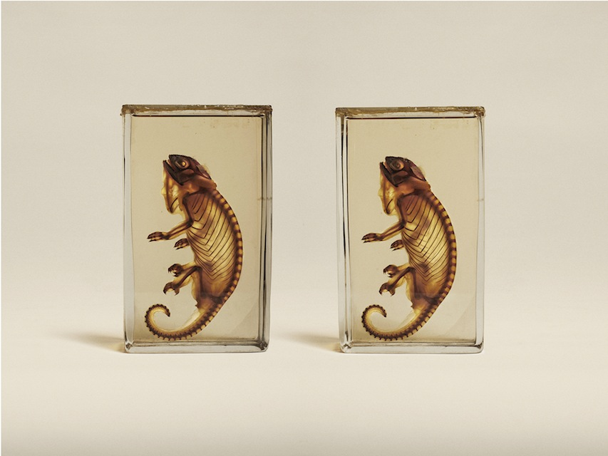 Jim Naughten: Animal Kingdom