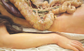 "Post image for The History of Life-Sized, Fully Dissectible ""Anatomical Venuses"""